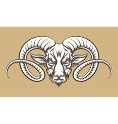 Head of A Ram vector image