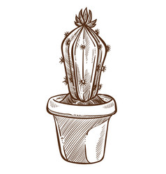 house plant cactus sketch indoor flower with vector image