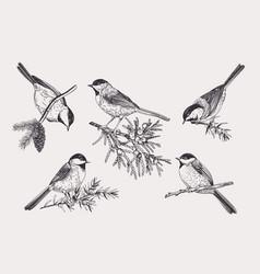 Set birds vector