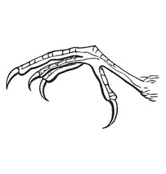 Barn swallow claw vintage vector