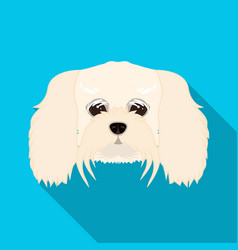 breed of a dog a lapdogmuzzle of a lapdog single vector image