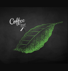 chalk drawn sketch of coffee leaf vector image