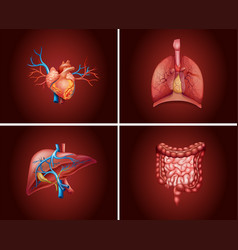 Four different parts of human organs vector