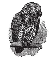 Gray parrot vintage vector