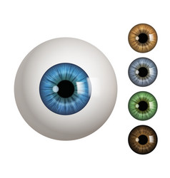 Human eyeball people anatomical items macro view vector
