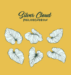 silver cloud palm leaves contour set vector image
