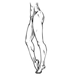 legs on tiptoe vector image