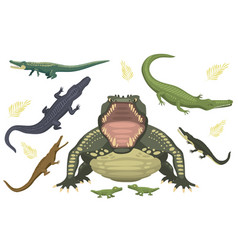cartoon green crocodile danger predator and vector image