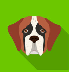 breed of a dog st bernardmuzzle of st bernard vector image