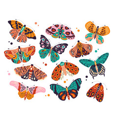 Collection colorful hand drawn butterflies vector