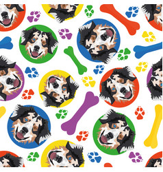 Colorful and playful australian shepherd vector