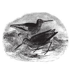 Gray snipe vintage vector