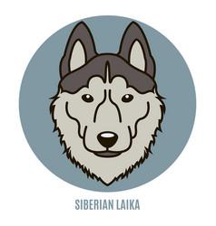 portrait siberian laika vector image