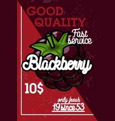 color vintage fruit banner vector image
