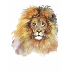 Watercolor lion on a white background vector