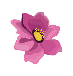 pink anemone flower design vector image