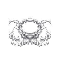 abstract dotwork horror grunge skull vector image
