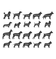 black dog breeds silhouettes isolated on vector image