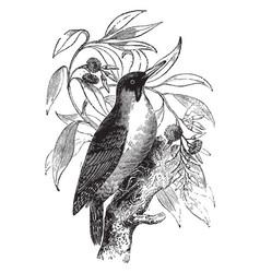 Green woodpecker vintage vector