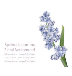 Lavender bouquet on white background spring vector