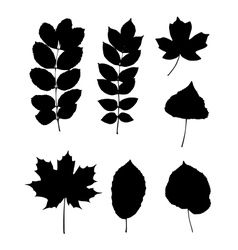 Various leaves vector image vector image