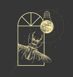 Window silhouette with stag beetle vector