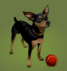 small dog with red ball vector image vector image