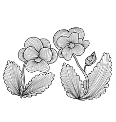 Decorative pansies vector