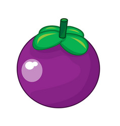 mangosteen fruit isolated vector image