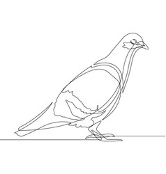pigeon bird one continuous line graphic vector image