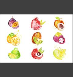 Set colorful watercolor fruits vector