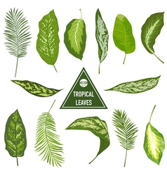 Set of Tropical Leaves - for design elements vector