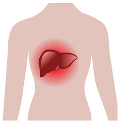 aching liver in a human body vector image
