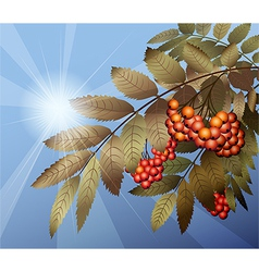 Mountain ash vector