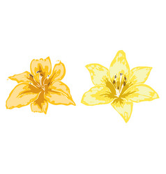 Two beautiful lily flowers of big lilies isolated vector