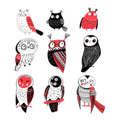 bright set graphic funny owls birds vector image