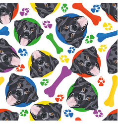 colorful and playful black lab vector image