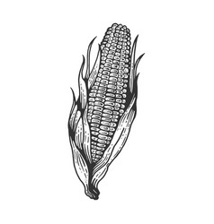 corn maize sketch engraving vector image