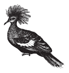 Great crowned pigeon vintage vector