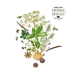 hand drawn background with herbs and spices vector image
