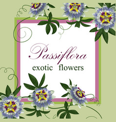 passiflora exotic postcard vector image vector image