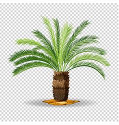 Type of palm tree on transparent background vector