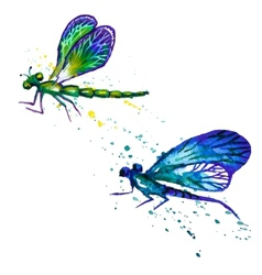 Watercolor dragonflies isolated on the white vector image