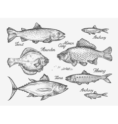 Hand drawn fish Sketch trout carp tuna herring vector image vector image