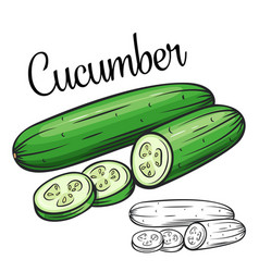 Cucumber drawing icon vector
