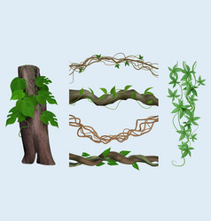 realistic lianas exotic botanical plants twisted vector image