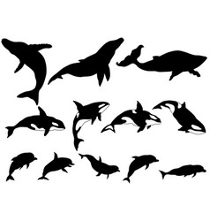 Set whale killer whale dolphin silhouettes vector