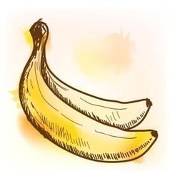 Banana watercolor painting vector image