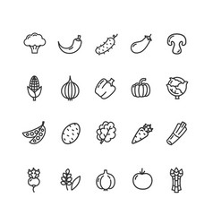 vegetables food black thin line icon set vector image vector image