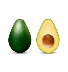 3d realistic whole and half avocado with vector image
